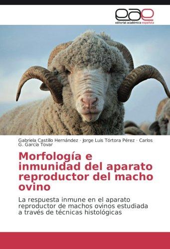 Morfología e inmunidad del aparato reproductor del macho ovino: La respuesta inmune en el aparato reproductor de machos ovinos estudiada a través de técnicas histológicas por Gabriela Castillo Hernández