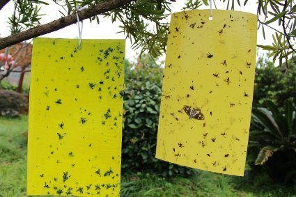 fly-trap-fruit-fly-trap-dual-sided-yellow-sticky-paper-stickers-flying-insect-trap-catcher-outdoor-f