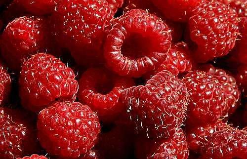exotic-plants-raspberry-red-10-semi