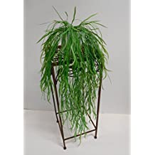 Hängepflanzen Zimmer suchergebnis auf amazon de für hängepflanzen