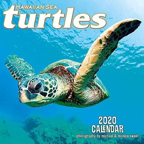 Pacifica Island Art - Wandkalender 2020 - Meeresschildkröten Hawaii von Michael & Monica Sweet