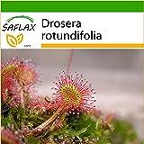 SAFLAX - Rundblättriger Sonnentau - 50 Samen - Mit Substrat - Drosera rotundifolia