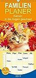 Katzen: in die Augen geschaut - Familienplaner hoch (Wandkalender 2019 , 21 cm x 45 cm, hoch): Katzen: geliebte Stubentiger (Monatskalender, 14 Seiten ) (CALVENDO Tiere)