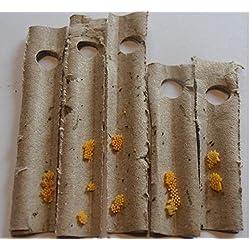 INSECTOSPHERE Oeufs de coccinelles à 2 Points (Adalia bipunctata) Anti pucerons des Arbres fruitiers et ornementaux - 150 œufs pour 1 Arbre.Traitement Naturel et Bio.