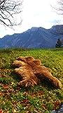 Felltrade Merino Schaffell Lammfell groß 120-130 cm braun ökologische Gerbung