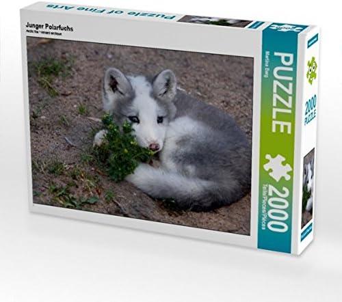 CALVENDO Puzzle Junger Polarfuchs 2000 Teile Lege-Grösse 90 x 67 cm Foto-Puzzle Bild Von Berg Martina | Matériaux Soigneusement Sélectionnés