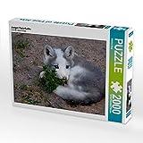 Junger Polarfuchs 2000 Teile Puzzle Quer