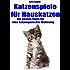 Katzenspiele für Hauskatzen. Die besten Tipps für eine katzengerechte Wohnung