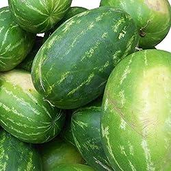 Rießen Wassermelone 15 Korn (Rar) >>>Fruchtgewicht von 12 bis 16 kg<<<