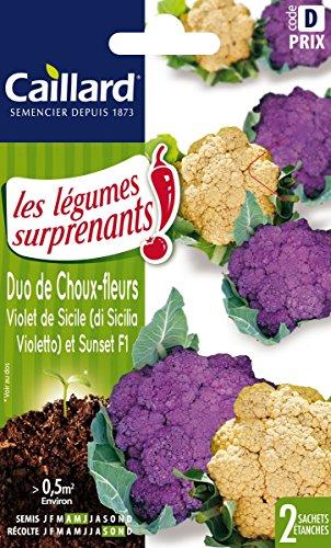 Caillard PFCC16528 Graines de Duo Chou Fleur Violet Sicile + Sunset F1 Surprenant