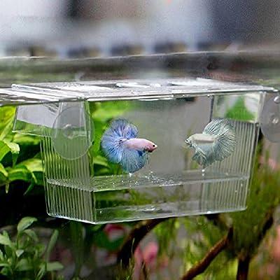 Globeagle Acryl Fisch Tank Zucht Isolation Box Aquarium Brutplatz Inkubator Halterung