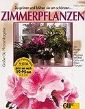 Zimmerpflanzen bei Amazon kaufen