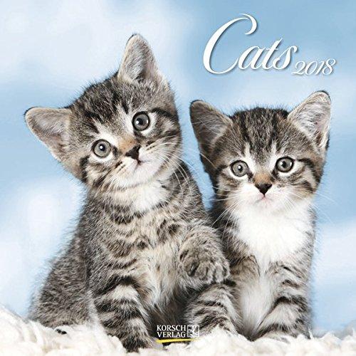 Cats 2018: Broschürenkalender mit Ferienterminen. Katzen und Kätzchen. 30 x 30 cm (Wand-kalender Blumen)