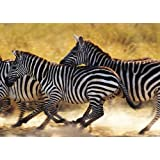 BBC Planet Earth Zebra Family Puzzle (1000 Pieces) by Jumbo Games