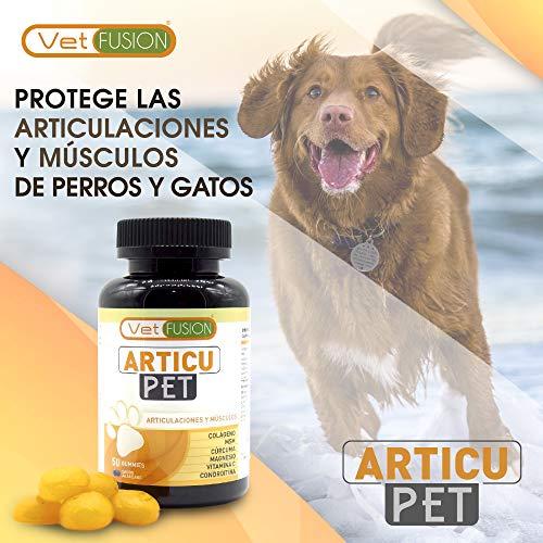 5156vxNiWvL - Antiinflamatorio Natural para Perros y Gatos | Colágeno + Cúrcuma + Condroitina + Magnesio + MSM + Vitamina C | Combate el dolor y la inflamación | Recupera su energía y movilidad | 50und. sin azúcar