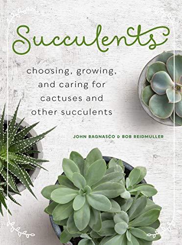 SUCCULENTS (MINI)