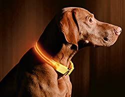 "Illumiseen Led Dog Collar - Usb Rechargeable - Available In 6 Colours & 6 Sizes - Makes Your Dog Visible, Safe & Seen - Orange, X-x-small (8.6 – 11.4""22 – 29cm)"