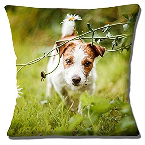 Cute Jack Russell Puppy Dog Tan White Smooth Hair Photo