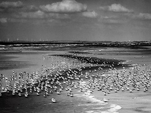 Artland Leinwand auf Keilrahmen oder gerolltes Poster mit Motiv Susanne Herppich Strand mit vielen kleinen Vögeln Landschaften Gewässer Meer Fotografie Schwarz/Weiß C9UJ
