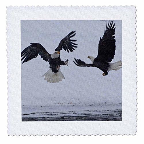 3drose QS _ 87410_ 2USA, Alaska, Chilkat-Fluss. Bald Eagle–US02bja0296–JAYNES Galerie, Quilt, Platz, 6von 6