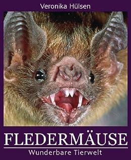 fledermuse-wunderbare-tierwelt-4