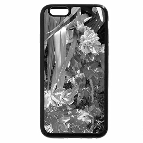 iPhone 6S Plus Case, iPhone 6 Plus Case (Black & White) - Alberta Wild Roses (Wild Dog Rose)