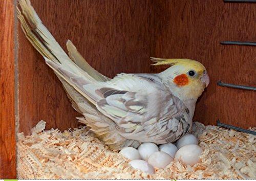 150grm Natural Soft Wood Shaving Bedding Cum Nesting Material for All Birds