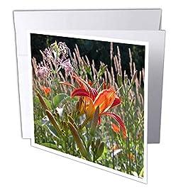 """3DROSE GC 11843_ 16x 15,2cm""""Lily di legno biglietto d' auguri (confezione da 6)"""