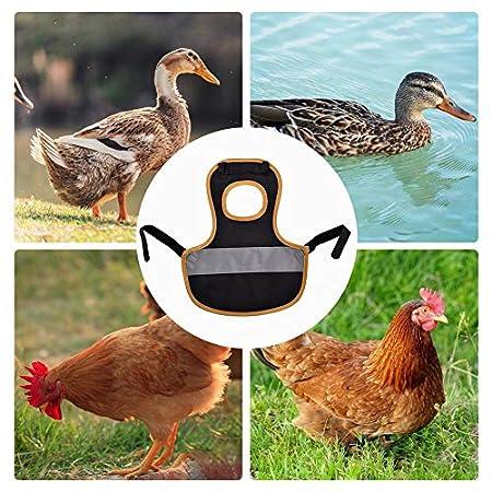 Huhn Sicherheitsweste, Warnweste Für Hühner, Huhn Kleidung Geflügel Huhn Und Ente Stehen Einstellbar Chicken Reflective Vest Hühnersattel, Verhindert Den Angriff Luftgetragener Raubtiere