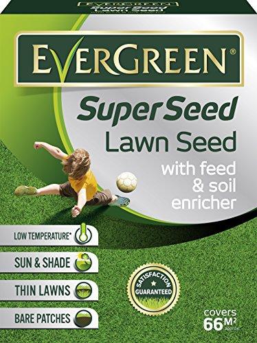 Evergreen 119458-semi per prato verde