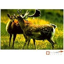Lernkarten - Sicher durch die Jägerprüfung