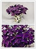 Pinkdose® Purple Shamrock- Oxalis triangularis Bulbs * Easy Grow * Perennial