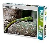 Goldstaubgecko, Big Island, Hawaii 2000 Teile Puzzle quer (CALVENDO Tiere)