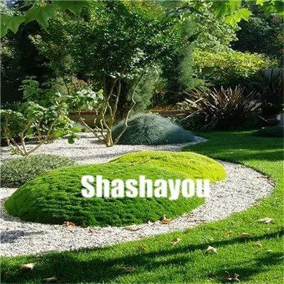 Bloom Green Co. 200 Pcs GAZONS Bonsai Golf de catégorie spéciale Evergreen Lawn Bonsai Terrains de soccer Villa haute Fleurs Etat Bonsai Jardin des plantes: 8