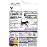PRO PLAN Junior -  Riche en Poulet - 3 KG - Croquettes pour chaton