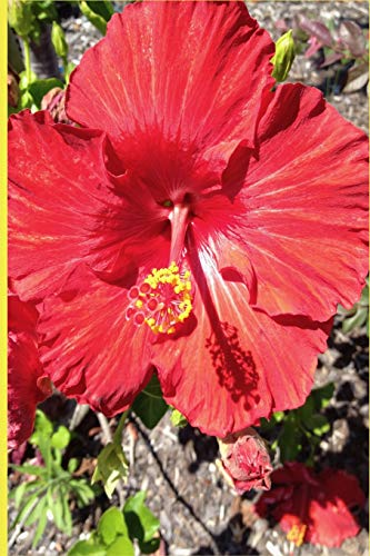 Red Hibiscus Flower Notebook: This beautiful red composition note book is the perfect accompaniment for lovers of this color flower. Great size to ... jot down your ideas and lists for daily use.