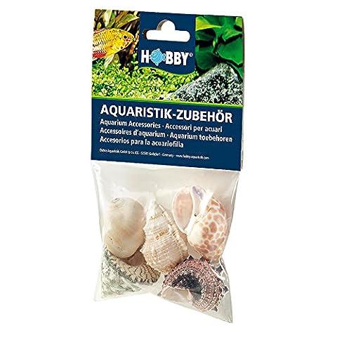 Hobby 40224 Sea Shells Set, L