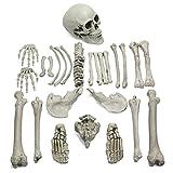 CoolChange Halloween Deko Skelett Knochen, 26 Teile