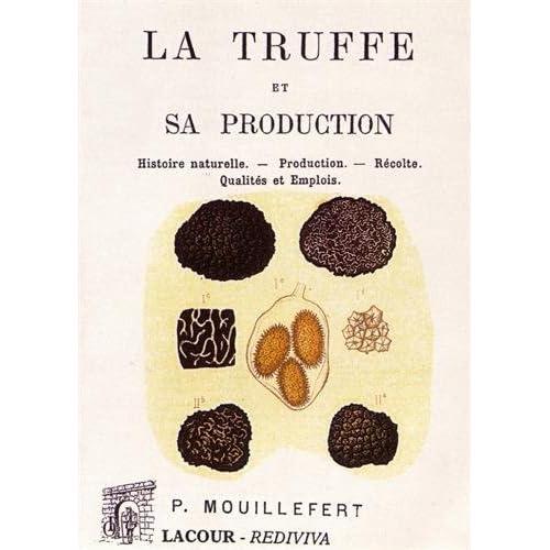 La truffe et sa production