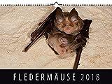 Fledermäuse 2018: Wandkalender -