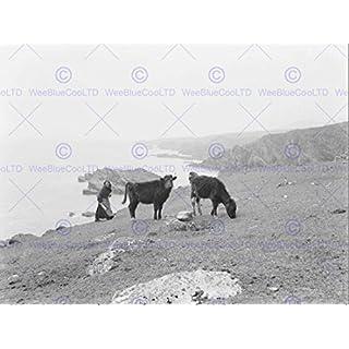 Wee Blue Coo Prints VINTAGE PHOTOGRAPHY LANDSCAPE ACHILL ISLAND IRELAND COW CATTLE MAYO 30X40 CMS FINE ART PRINT ART POSTER Jahrgang FOTO Landschaft Insel Irland Kunstdruck