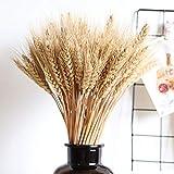 hinffinity 100pcs blé Fleurs séchées Bouquet d'herbes sèches Naturelles Couleurs primaires séchées véritable blé pour Les décorations de Mariage