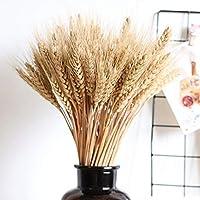 Caractéristiques du produit:Sélectionnés à la main pour la qualité cultivés dans de véritables faisceaux de blé séchés à la ferme, ceux-ci contiennent 100 tiges de bléLe blé Triticum blond naturel est idéal pour les bouquets, les centres de table ...