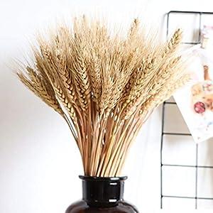 Ablerfly – 100 piezas de flores secas de trigo de gran tamaño para decoración de bodas, alta simulación, flores…