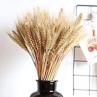 Ablerfly – 100 piezas de flores secas de trigo de gran tamaño para decoración de bodas, alta simulación, flores artificiales, estalkes, calor, flores secas de forma natural