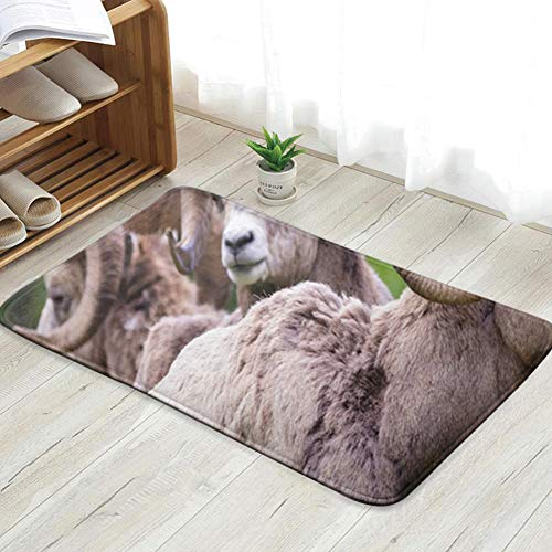 Bighorn Sheep Ovis Canadensis Three Animals Wildlife Adult Nature Fun Welcome Doormat Personalized Indoor Floor Mats Living Room Bedroom Bathroom Door Mat 31.5 X 19.5 Inch