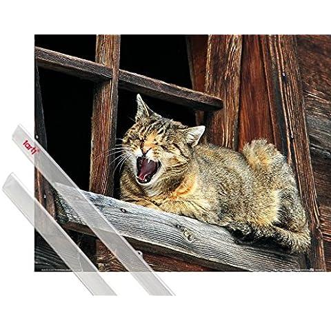 Poster + Sospensione : Gatti Poster Stampa (50x40 cm) Siesta Del Gatto, Non Disturbare E Coppia Di Barre Porta Poster Trasparente 1art1® - Non Disturbare Cat