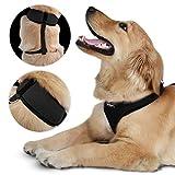 Hundegeschirr Hundehalsband Hundezubehör in vier verschiedenen Farben und 5 verschiedenen Größen (XS, S, M, L, XL) größenverstellbar - 3