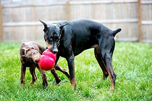 KONG-Bounzer-Dog-Toy-Medium-Red