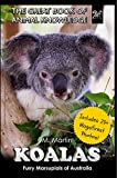 "We always think of Koalas as bears. In fact, many of us may have owned a teddy bear in the form of a koala. So, the term ""koala bear"" which we most often use is not quite correct. This is because koalas belong to the marsupial family. This is the fam..."